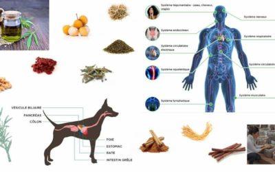 Votre bien-être et celui de vos animaux : une solution, le CBD