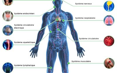 L'équilibre des systèmes, racine de notre santé