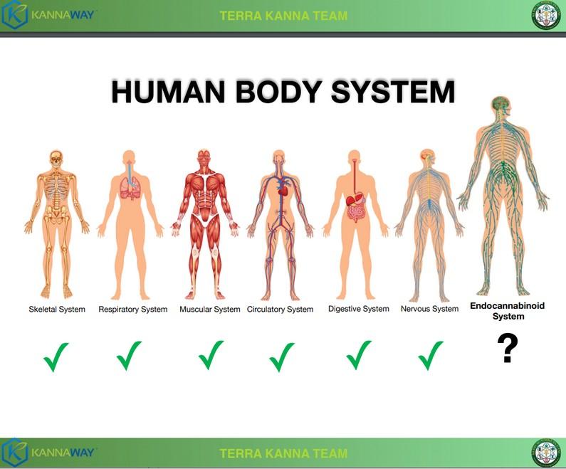 Histoires de guérisons système endocannabinoïde